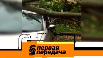 Выпуск от 4 октября 2020 года.Кто ответит за упавшее на машины дерево икак пассажир оказался виноват всмертельном ДТП.НТВ.Ru: новости, видео, программы телеканала НТВ