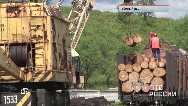 «Темный лес».«Темный лес».НТВ.Ru: новости, видео, программы телеканала НТВ