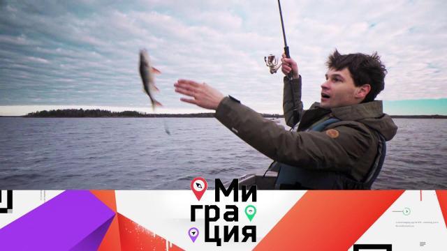Выборг.Выборг.НТВ.Ru: новости, видео, программы телеканала НТВ