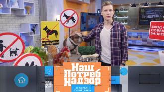 Выпуск от 31 января 2021 года.Вход с собакой в магазин, паразиты в продуктах и тест нерафинированного масла.НТВ.Ru: новости, видео, программы телеканала НТВ