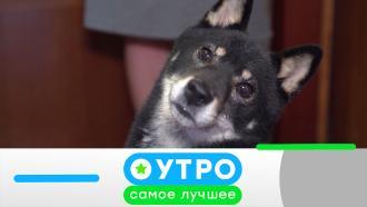 11февраля 2021года.11февраля 2021года.НТВ.Ru: новости, видео, программы телеканала НТВ