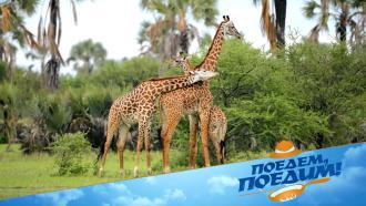Федерико Арнальди отправится на сафари вТанзанию иокунется вколорит Восточной Африки. «Поедем, поедим!»— 6марта на НТВ