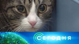 1 марта 2021 года. 13:00.1 марта 2021 года. 13:00.НТВ.Ru: новости, видео, программы телеканала НТВ