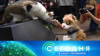 1 марта 2021 года. 19:20.1 марта 2021 года. 19:20.НТВ.Ru: новости, видео, программы телеканала НТВ