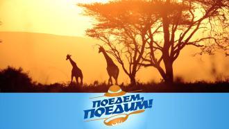Выпуск от 6марта 2021года.Танзания: сафари, завтрак скрокодилами, душ вджунглях ирыбный аукцион.НТВ.Ru: новости, видео, программы телеканала НТВ
