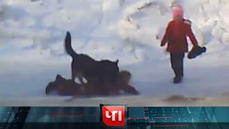 11марта 2021года.11марта 2021года.НТВ.Ru: новости, видео, программы телеканала НТВ