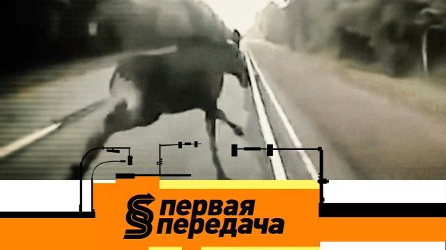 Выпуск от 14 марта 2021 года.ДТП с животными, а также — плюсы и минусы шумоизоляции автомобиля.НТВ.Ru: новости, видео, программы телеканала НТВ