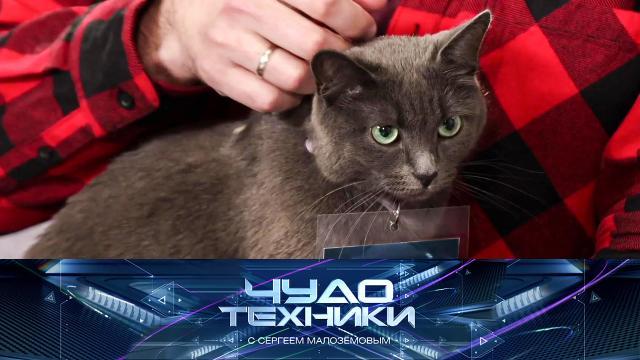 Выпуск от 21 марта 2021 года.Корм, снижающий аллергенность кошек, атакже — тест ножеточек.НТВ.Ru: новости, видео, программы телеканала НТВ