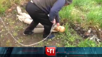 23 марта 2021 года.23 марта 2021 года.НТВ.Ru: новости, видео, программы телеканала НТВ