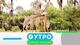 25марта 2021года.25марта 2021года.НТВ.Ru: новости, видео, программы телеканала НТВ