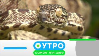 26 апреля 2021 года.26 апреля 2021 года.НТВ.Ru: новости, видео, программы телеканала НТВ