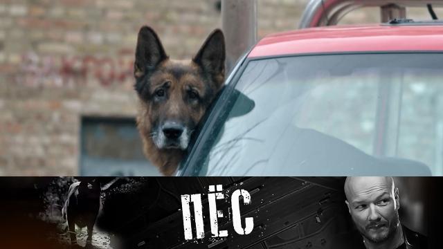 Праздничная премьера! Новые серии любимого сериала «Пёс»— 12июня на НТВ.НТВ.Ru: новости, видео, программы телеканала НТВ