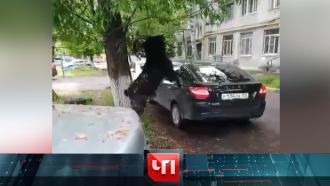 11 июня 2021 года.11 июня 2021 года.НТВ.Ru: новости, видео, программы телеканала НТВ