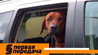 Путешествие ссобакой, навязывание услуг вавтосалоне и«подстава» от погибшего вДТП пассажира. «Первая передача»— на НТВ