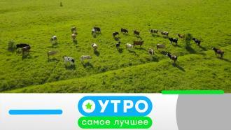 23 июня 2021года.23 июня 2021года.НТВ.Ru: новости, видео, программы телеканала НТВ