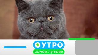 13 июля 2021 года.13 июля 2021 года.НТВ.Ru: новости, видео, программы телеканала НТВ