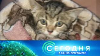 28 июля 2021 года. 16:10.28 июля 2021 года. 16:10.НТВ.Ru: новости, видео, программы телеканала НТВ