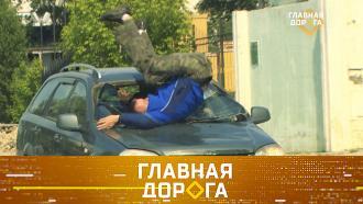 Выпуск от 28 августа 2021 года.Помощь сбитому пешеходу, новые штрафы и приговор скандальному блогеру.НТВ.Ru: новости, видео, программы телеканала НТВ
