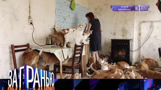 7октября 2021года.«Кошки москвички».НТВ.Ru: новости, видео, программы телеканала НТВ