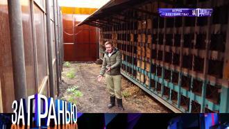 18 октября 2021 года.«Ферма для убийства?».НТВ.Ru: новости, видео, программы телеканала НТВ