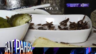 27октября 2021года.«Тараканы из всех щелей».НТВ.Ru: новости, видео, программы телеканала НТВ