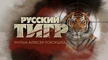 Русский тигр