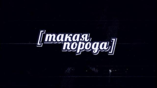 Такая порода.НТВ.Ru: новости, видео, программы телеканала НТВ